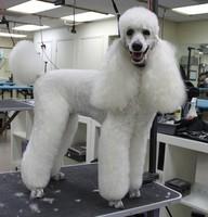 after dog